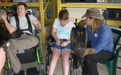 Birds of Prey Day: Activities for People Living with Disability