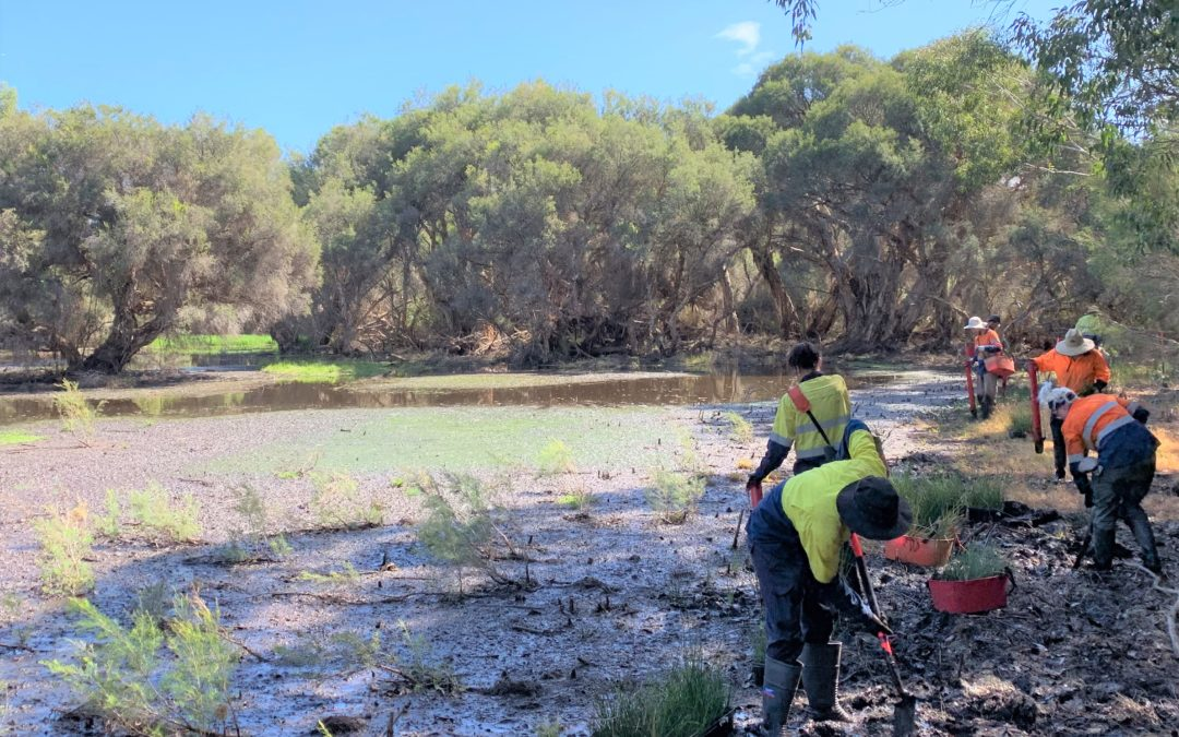 Record planting Day for Yellagonga Regional Park