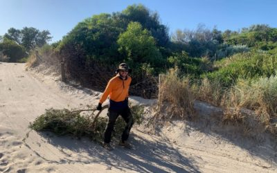Combatting dune erosion at Coogee Beach